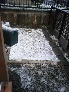 Snow090426_0741